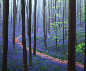 forest, belgium, and nature image