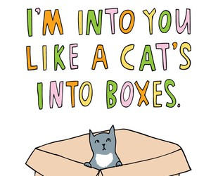 box, cat, and you image