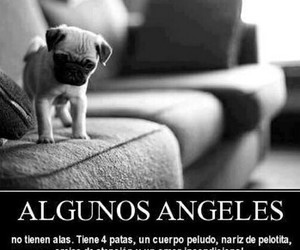 animals, frases, and love image
