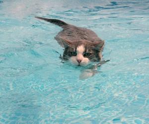 cat, water, and swim image