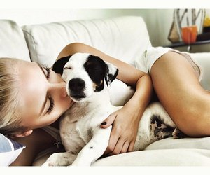 chill, cuddles, and dog image