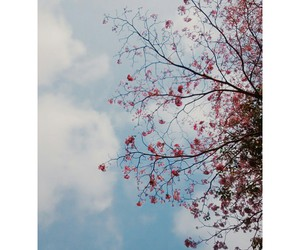 flower, summer, and bluesky image