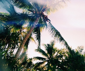 summer, nature, and palm tree image