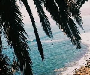 beach, coast, and leaves image