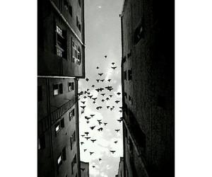 bird, birds, and white image
