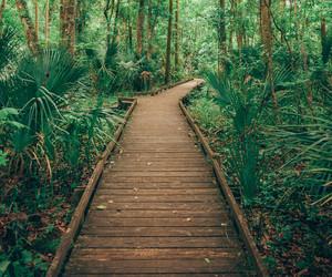 beautiful, green, and wild image