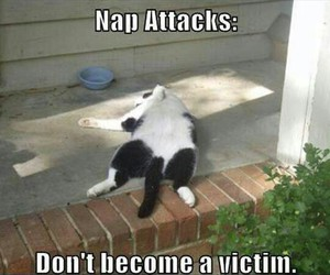 funny, cat, and nap image