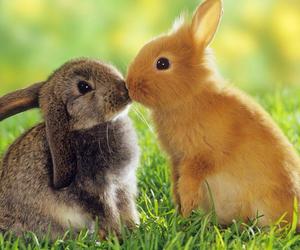 animals, nature, and kiss image