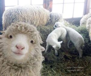lol, sheep, and smile image
