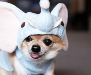 dog, cute, and elephant image