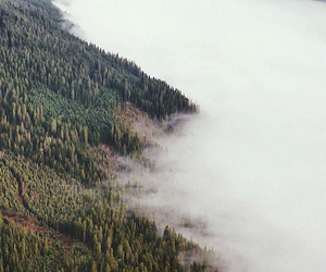 fogg, forest, and morning image