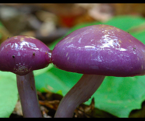 nature, shrooms, and purple image