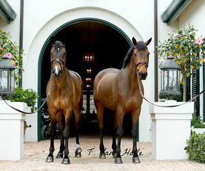brothers, brown, and equestrian image