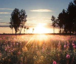 sun and nature image