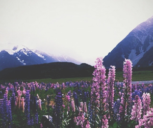 flowers, mountains, and hills image