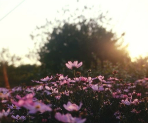 Image by ωιєη