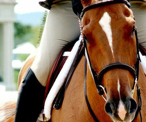 horse, hunter, and eventer image