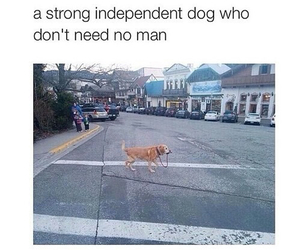 dog, funny, and independent image