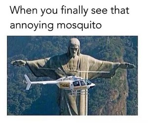 funny, mosquito, and brazil image