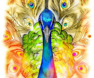 peacock, bird, and art image