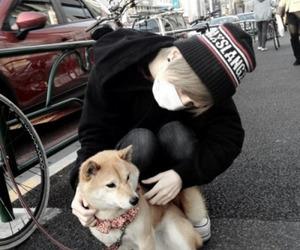 dog, japan, and boy image
