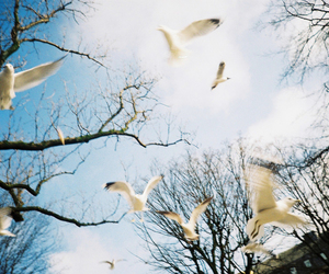 birds, lomo, and lc-a image