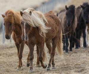 horses, ponies, and wild image