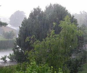rain, pale, and trees image