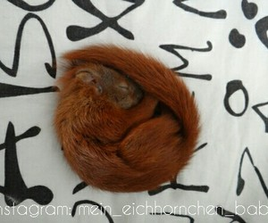 squirrel, animal, and baby image