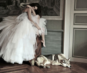 dress, wolf, and dog image