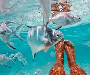 amazing, forever, and fish image