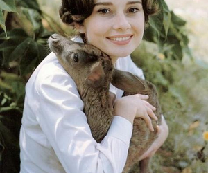 audrey hepburn, deer, and audrey image