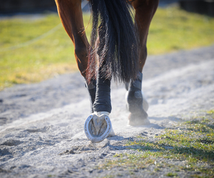 horse, horse riding, and sand image