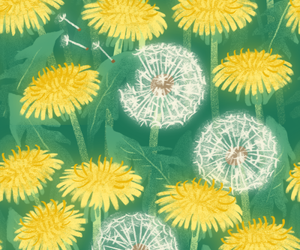 beautiful, daisies, and dandelion image