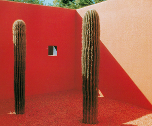 cactus and red image