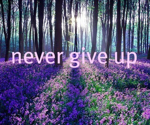 flowers, purple, and quote image