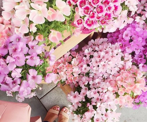flowers, pink, and spring image