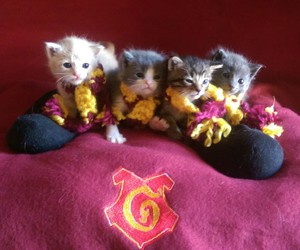 cat, gryffindor, and harry potter image