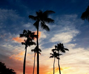 beach, sky, and palm trees image
