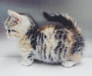 animal, cute cat, and kitten image