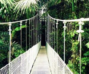 adventure, bridge, and costa rica image