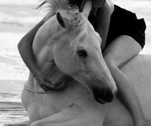 girl, horse, and sea image