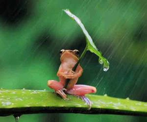 frog, rain, and animal image