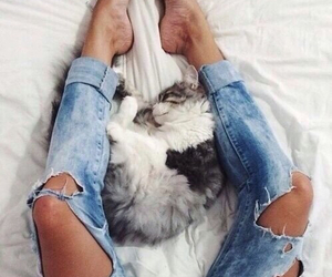 cat, jeans, and style image