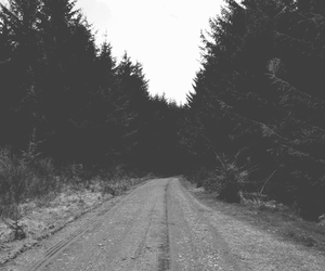 b&w, forest, and grunge image