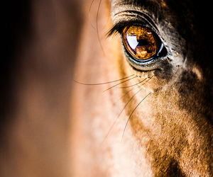 horse and eye image