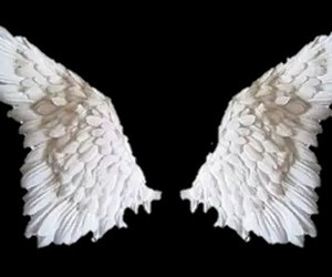 angel, fly, and free image
