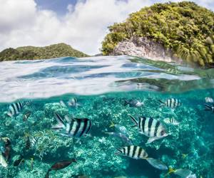 beautiful, sea, and fishes image