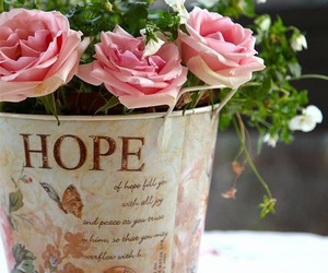 flowers, hope, and rose image