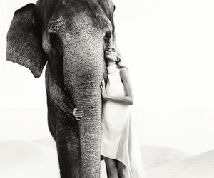 elephant, animal, and girl image